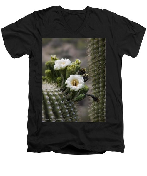 Men's V-Neck T-Shirt featuring the photograph Magnificant Bloom Of The Saguaro by Lucinda Walter