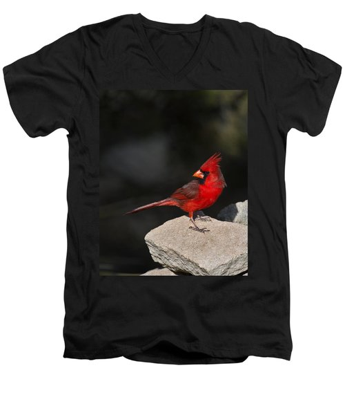 Male Cardinal Men's V-Neck T-Shirt