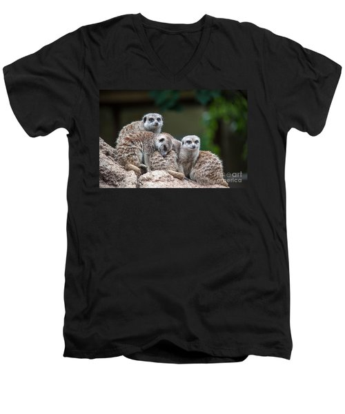 Meerkat Family Men's V-Neck T-Shirt