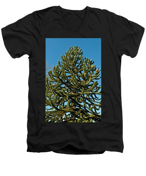 Monkey Puzzle Tree E Men's V-Neck T-Shirt by Tikvah's Hope