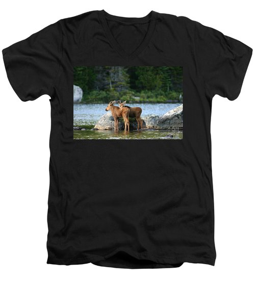 Moose Calves In Maine Men's V-Neck T-Shirt by Jeannette Hunt