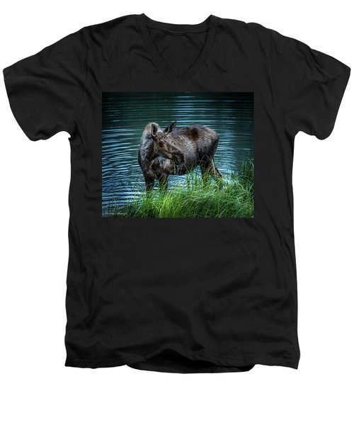 Moose In The Water Men's V-Neck T-Shirt by Andrew Matwijec