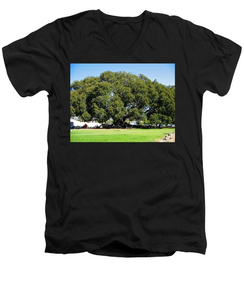 Moreton Fig Tree In Santa Barbara Men's V-Neck T-Shirt