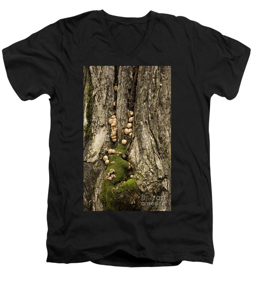 Moss-shrooms On A Tree Men's V-Neck T-Shirt