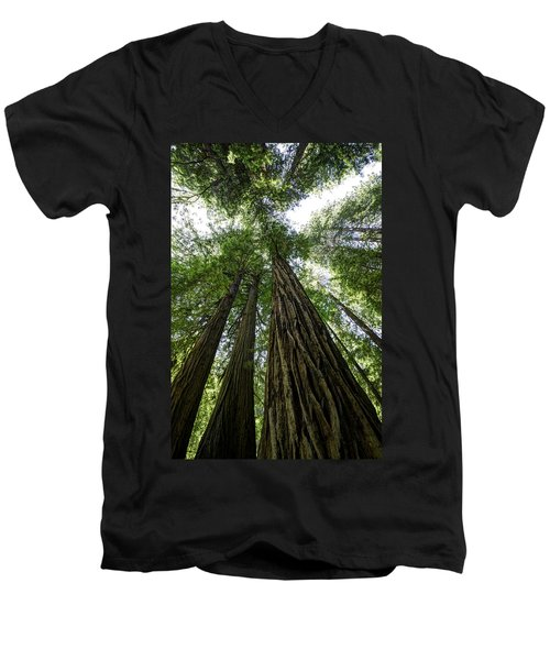 Muir Woods I Men's V-Neck T-Shirt