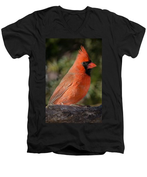 Northern Cardinal 2 Men's V-Neck T-Shirt by Kenneth Cole