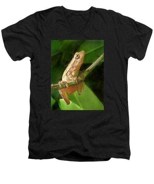 Northern Spring Peeper Men's V-Neck T-Shirt