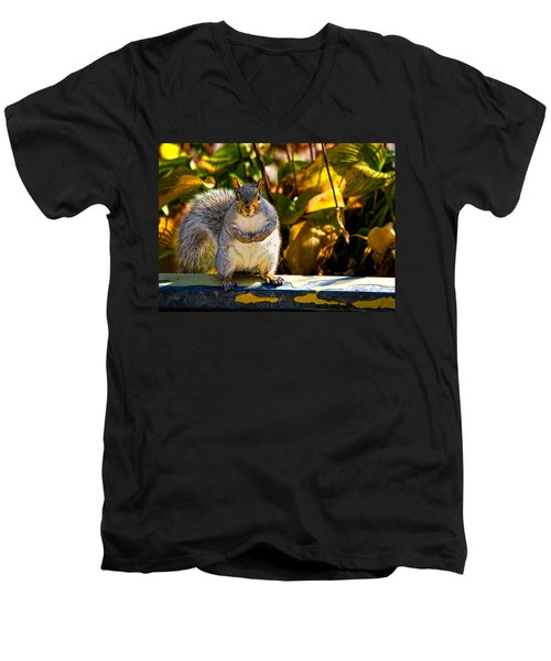One Gray Squirrel Men's V-Neck T-Shirt