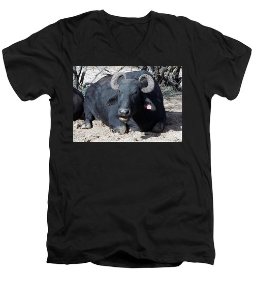 Out Of Africa  Water Buffalo Men's V-Neck T-Shirt
