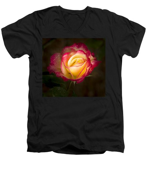 Portrait Of A Double Delight Rose Men's V-Neck T-Shirt