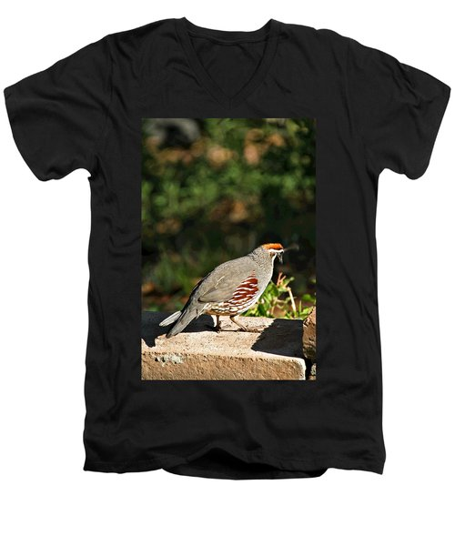 Quail Men's V-Neck T-Shirt