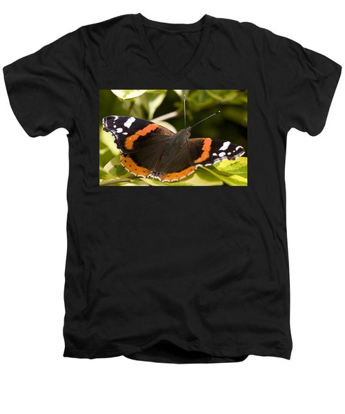 Red Admiral Butterfly Men's V-Neck T-Shirt by Richard Thomas