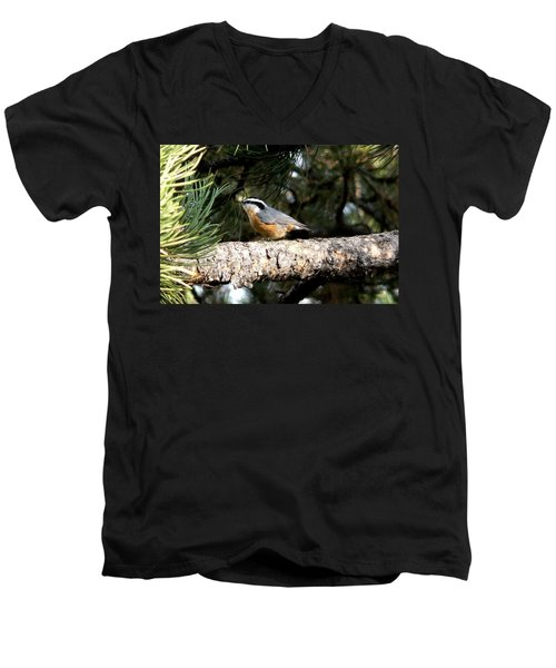 Red-breasted Nuthatch In Pine Tree Men's V-Neck T-Shirt