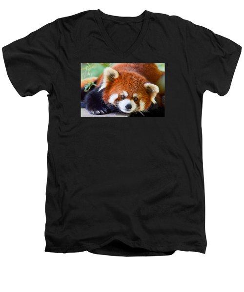 Red Panda Men's V-Neck T-Shirt by Michael Hubley