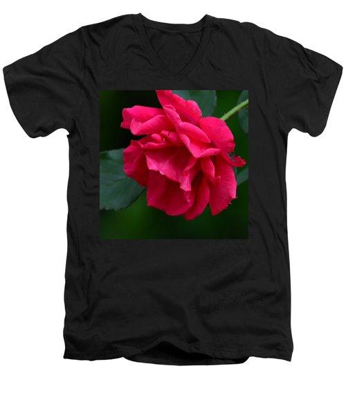 Red Rose 2013 Men's V-Neck T-Shirt by Maria Urso