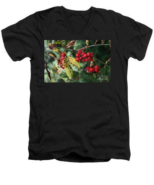 Red Summer Berries - Whistler Men's V-Neck T-Shirt by Amanda Holmes Tzafrir