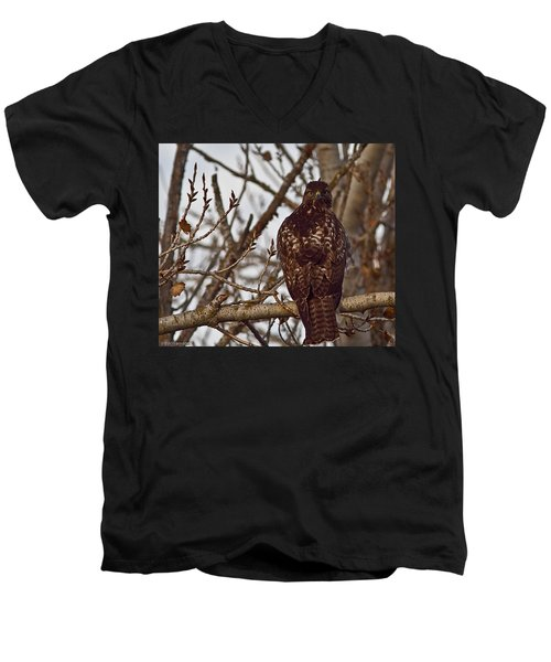 Red Tail Hawk Men's V-Neck T-Shirt by Brian Williamson