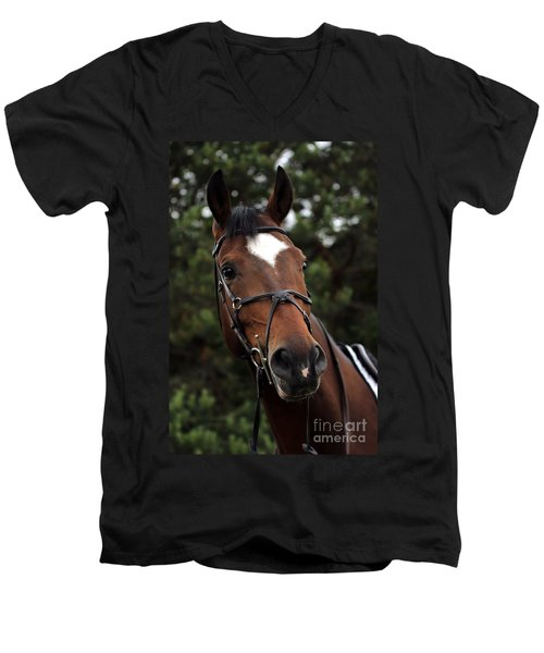 Regal Horse Men's V-Neck T-Shirt