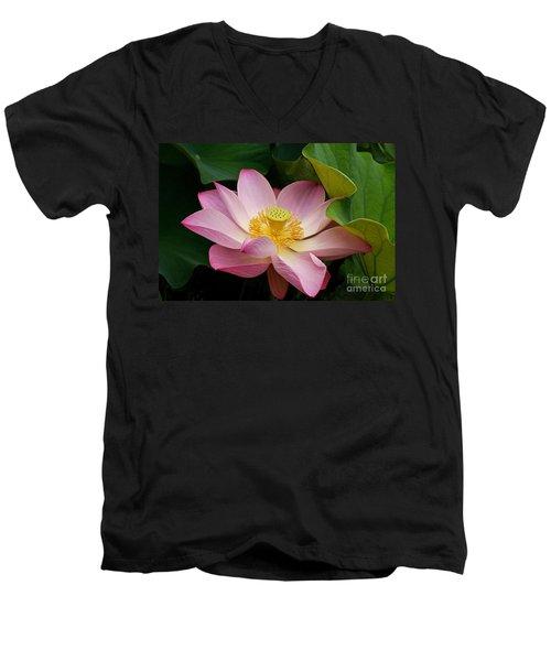 Sacred Lotus Men's V-Neck T-Shirt