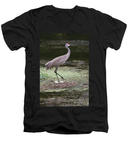 Sandhill Crane And Eggs Men's V-Neck T-Shirt