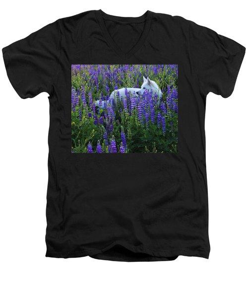 Sekani In Lupine Men's V-Neck T-Shirt