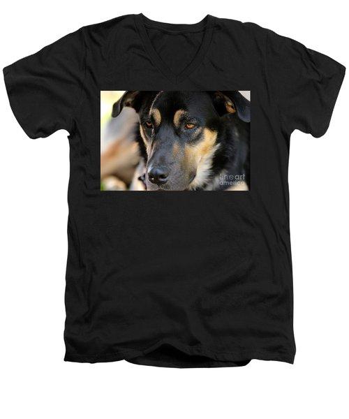 Shepherd Face Men's V-Neck T-Shirt