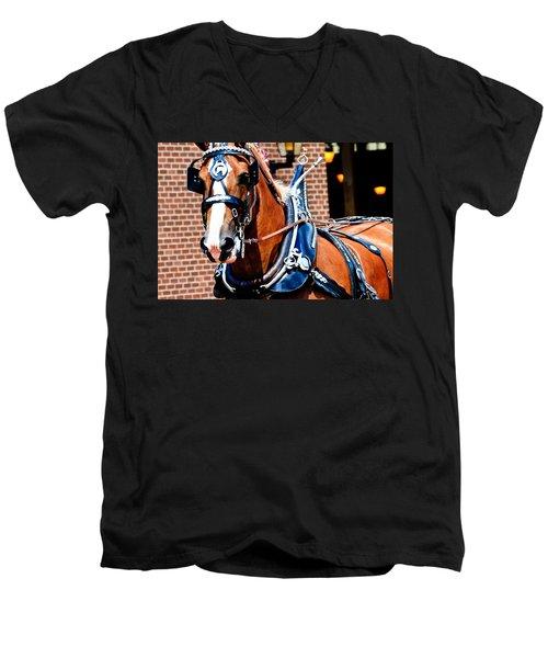 Show Horse Men's V-Neck T-Shirt
