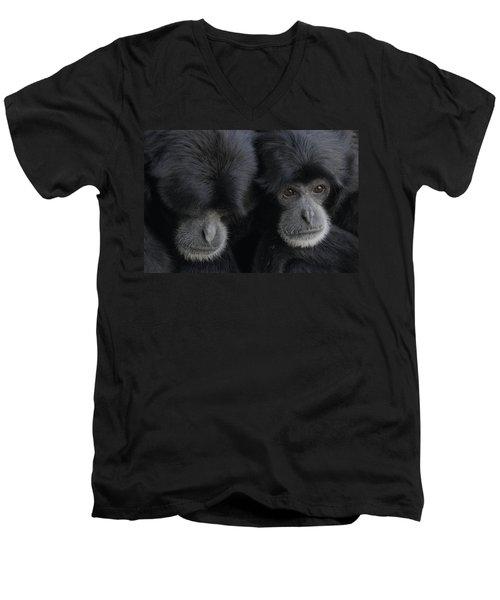 Siamang Pair Men's V-Neck T-Shirt