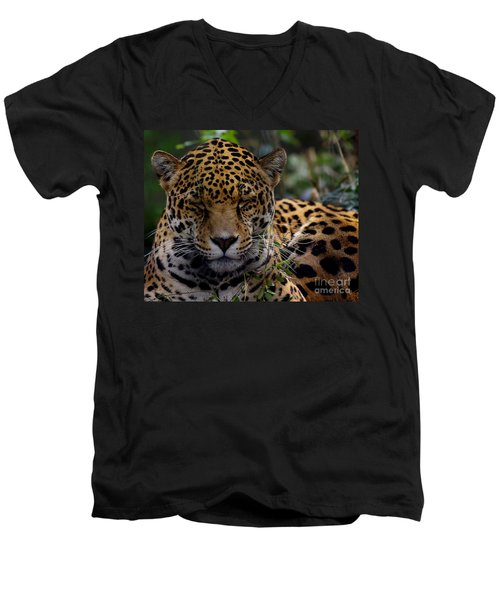 Sleeping Jaguar Men's V-Neck T-Shirt by Liz Masoner