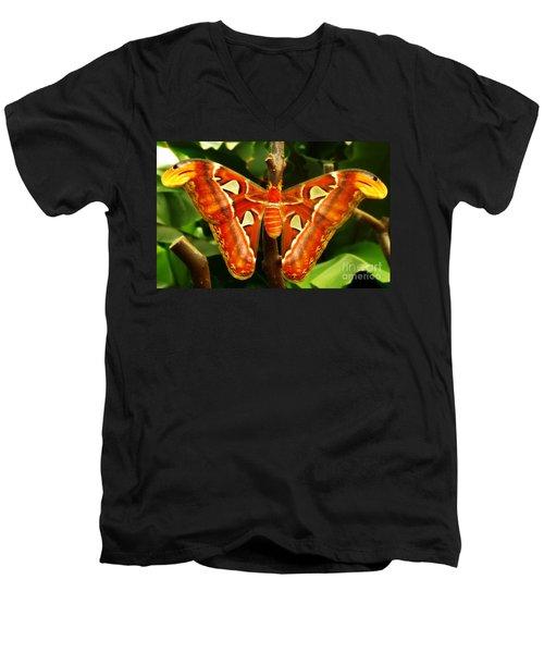 Snake Head Men's V-Neck T-Shirt by Clare Bevan