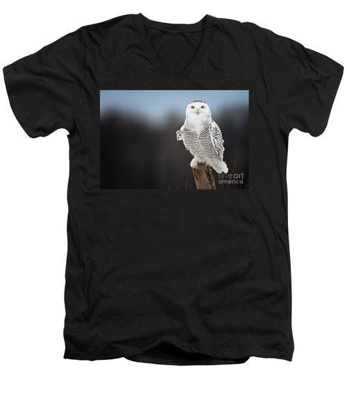 Snowy Owl Pictures 13 Men's V-Neck T-Shirt