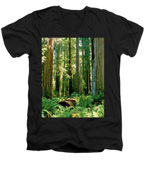Stout Grove Coastal Redwoods Men's V-Neck T-Shirt