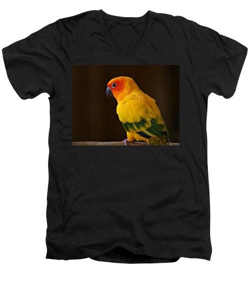 Sun Conure Parrot Men's V-Neck T-Shirt
