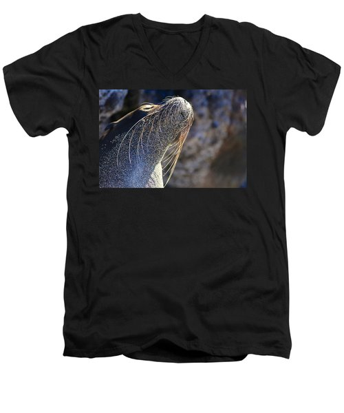 Sunbathing Galapagos Sea Lion Men's V-Neck T-Shirt