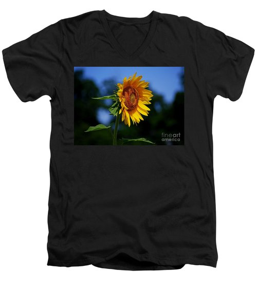 Sunflower With Honeybee Men's V-Neck T-Shirt by Catherine Sherman