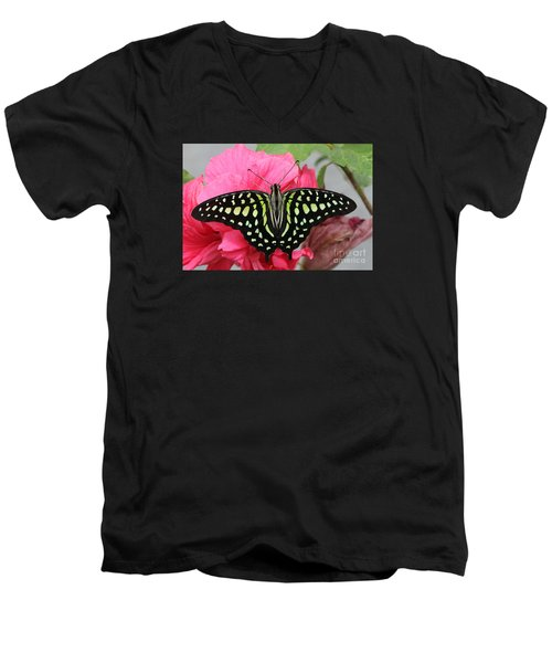 Men's V-Neck T-Shirt featuring the photograph Tailed Jay Butterfly #6 by Judy Whitton