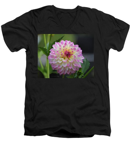 The Beautiful Dahlia Men's V-Neck T-Shirt by Jeanette C Landstrom