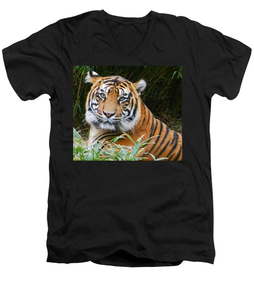 The Eyes Of A Sumatran Tiger Men's V-Neck T-Shirt by Emmy Marie Vickers
