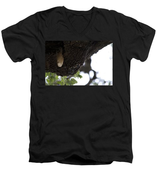 The Live Oak Men's V-Neck T-Shirt