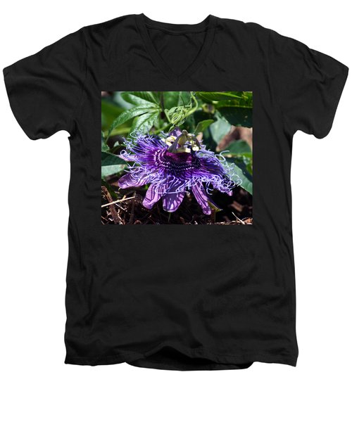 The Passion Flower Men's V-Neck T-Shirt