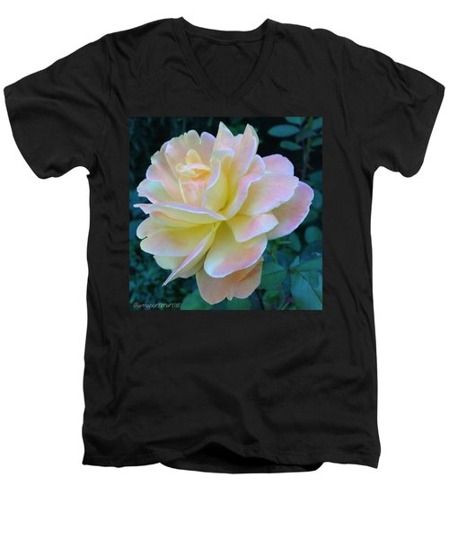 The Rose For A Rose Is A Rose Is A Rose Men's V-Neck T-Shirt