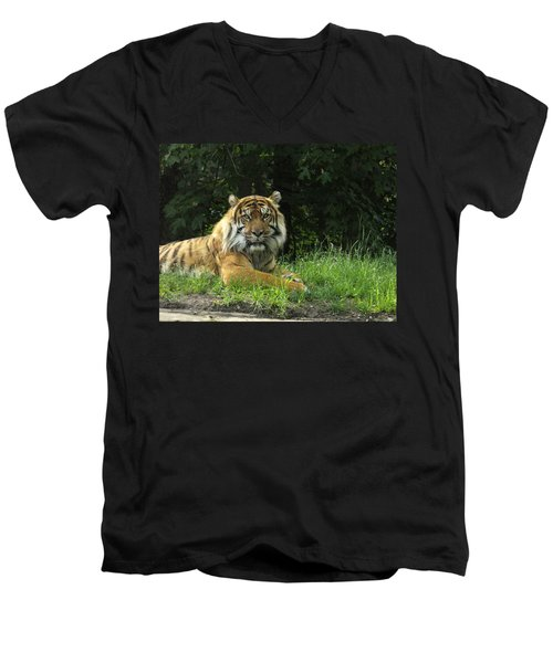 Men's V-Neck T-Shirt featuring the photograph Tiger At Rest by Lingfai Leung