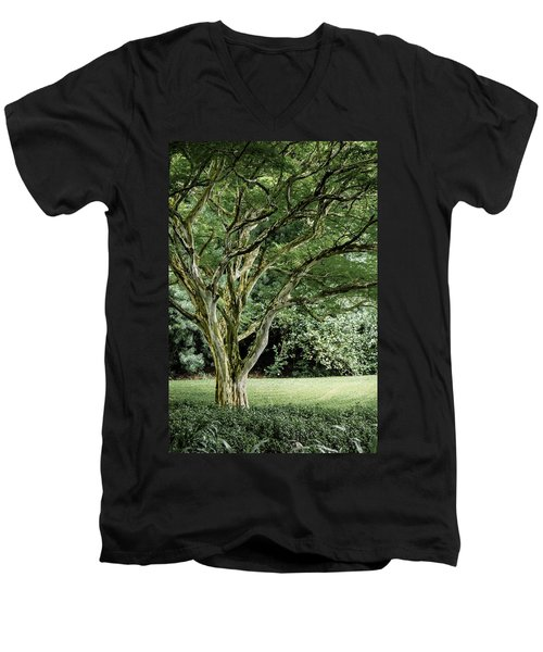 Tree Of Life Men's V-Neck T-Shirt by Debbie Karnes