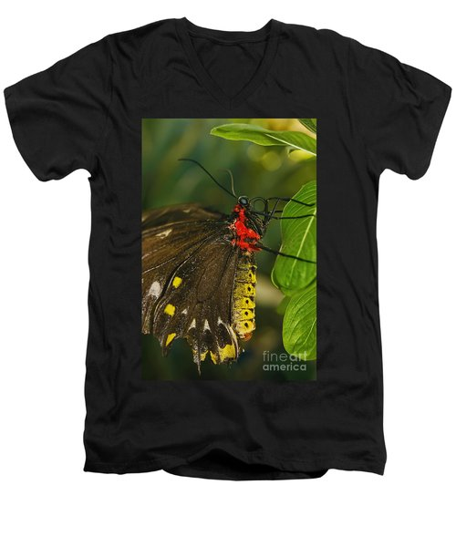 Men's V-Neck T-Shirt featuring the photograph Troides Helena Butterfly  by Olga Hamilton