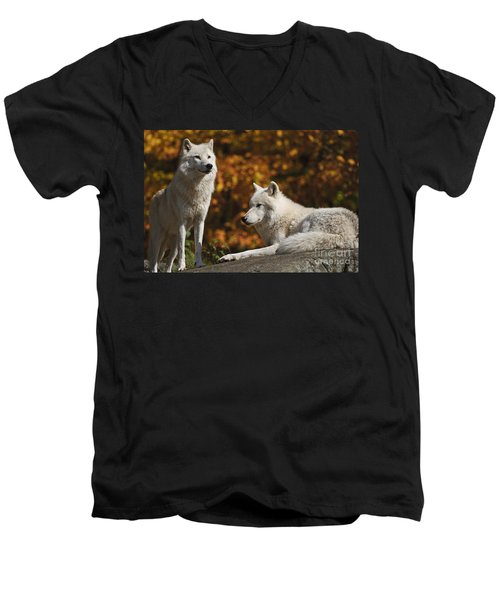 Men's V-Neck T-Shirt featuring the photograph Two Arctic Wolves On Rock Hill by Wolves Only