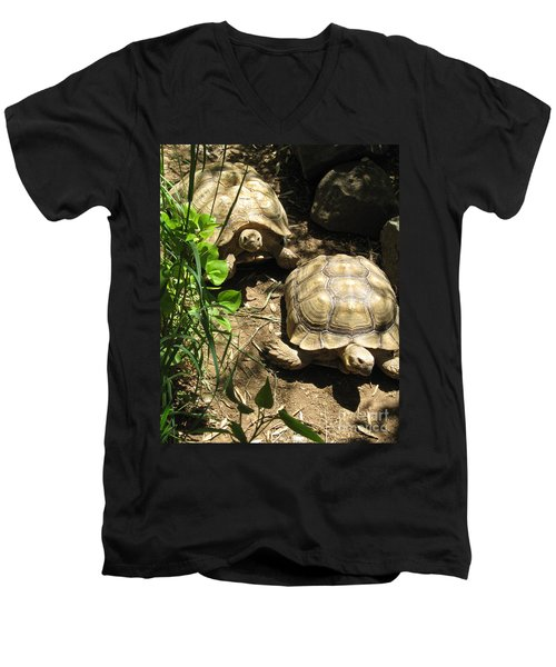 Two Tortoises Men's V-Neck T-Shirt by CML Brown