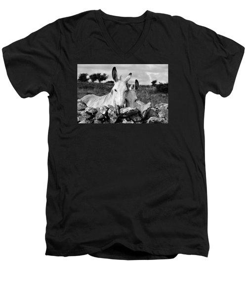 Two White Irish Donkeys Men's V-Neck T-Shirt