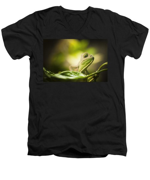 Veiled Chameleon Is Watching You Men's V-Neck T-Shirt by Bradley R Youngberg