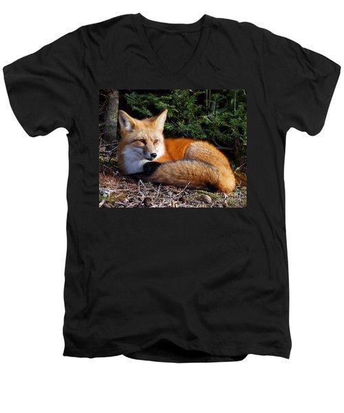 Vested Fox Men's V-Neck T-Shirt