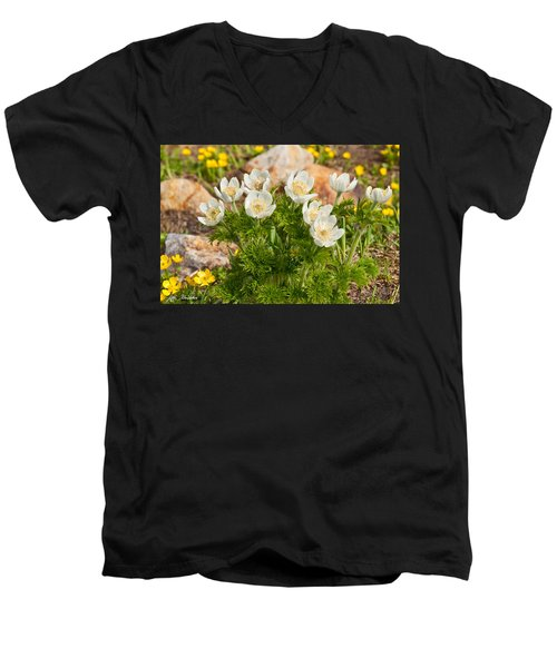 Western Pasqueflower And Buttercups Blooming In A Meadow Men's V-Neck T-Shirt by Jeff Goulden